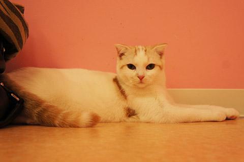 猫カフェ猫スタッフ2