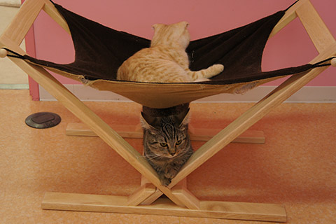 猫カフェ猫スタッフ3