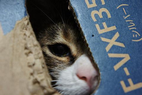 箱の中から様子を伺う猫