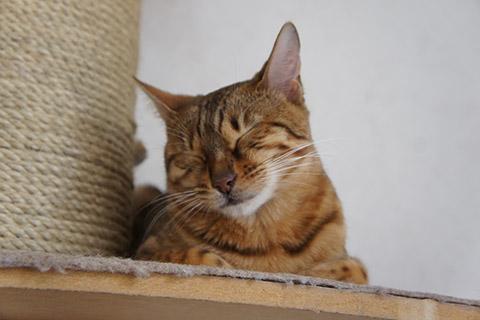 眠るネコ2