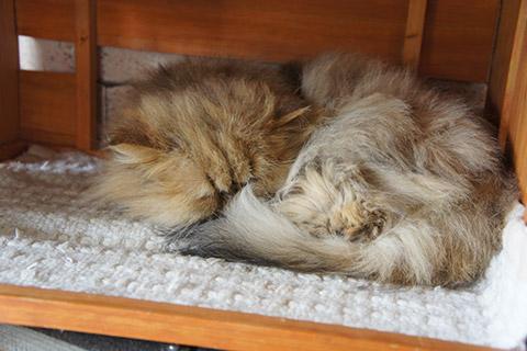 眠るネコ3