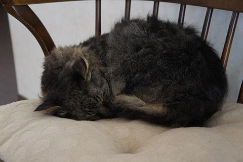 眠るネコ4