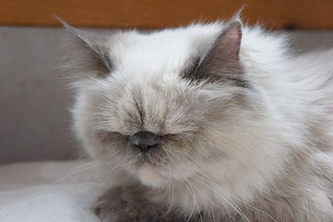 眠るネコ1