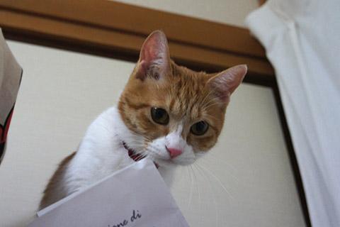 いたずらネコ1