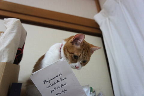 いたずらネコ2