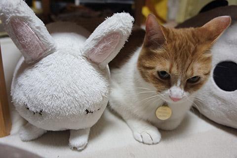 ウサギとネコ