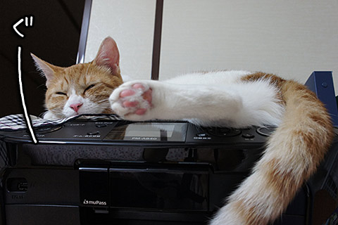 プリンターで寝る猫2