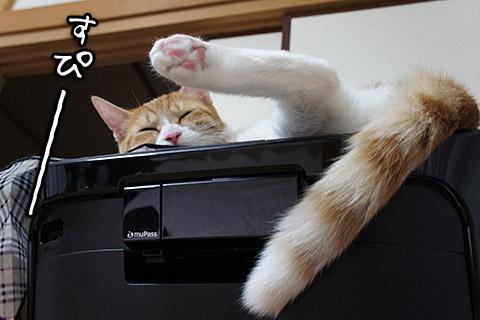 プリンターで寝る猫3