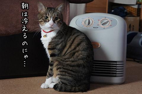 ファンヒーター好きなネコその1