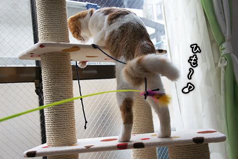 紐を追いかける仔猫