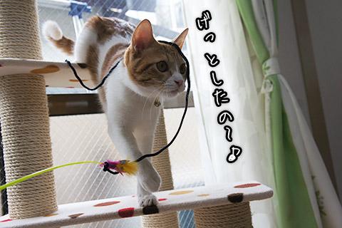 紐を捕まえた仔猫