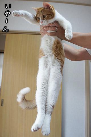 高い高ーい仔猫