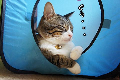 キューブで寝る猫