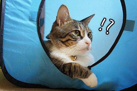 キューブ内の猫