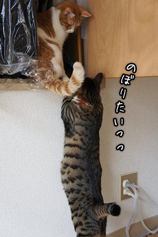 登れない猫