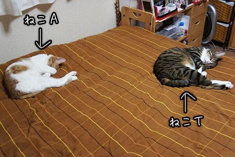 猫の寝相シンクロその一