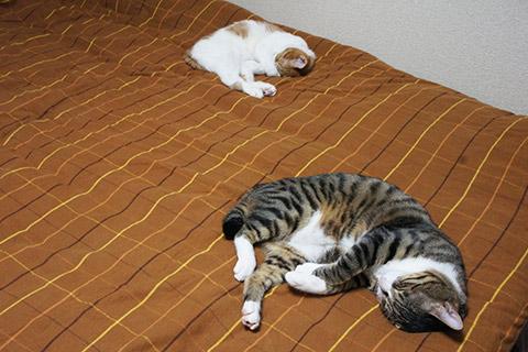 猫の寝相シンクロその二