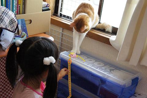 メス猫と女の子