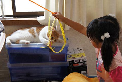 メス猫と女の子2