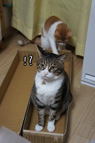 同居猫にしっぽを狙われる猫