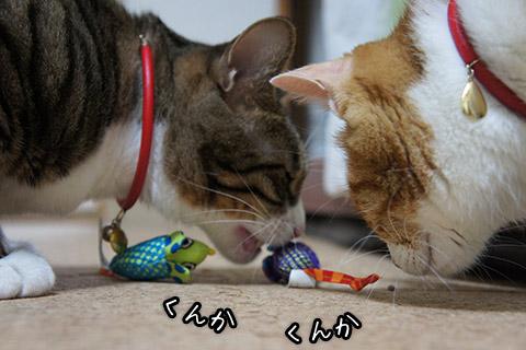 おもちゃを嗅ぐ猫