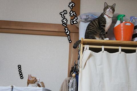 ハンガーラックに登る猫