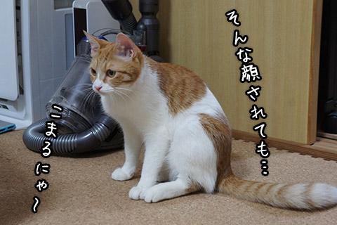 どうでもいい猫