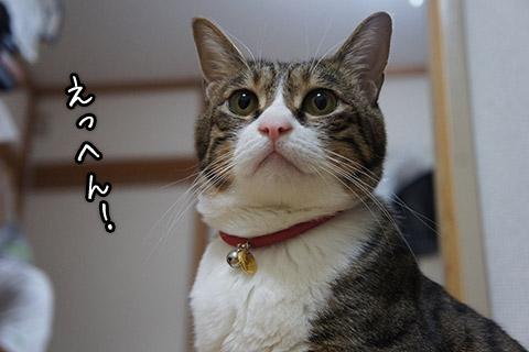 自慢気な猫