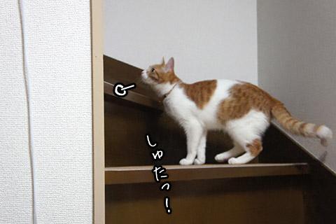 オテンバ猫