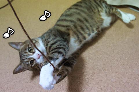 紐遊びに興じるネコ