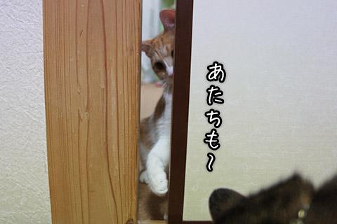 覗きこむネコ