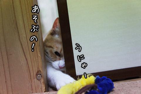 無理やり遊ぶネコ