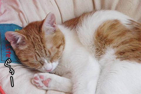 熟睡するネコ