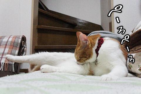 さらに熱心に毛づくろいする猫