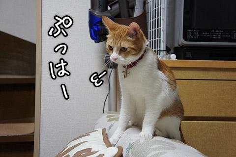 満足気なネコ