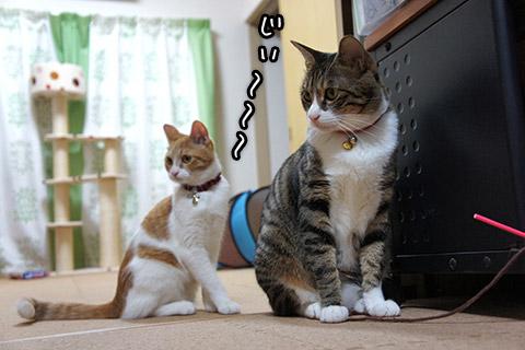 何かを見つめるネコたち