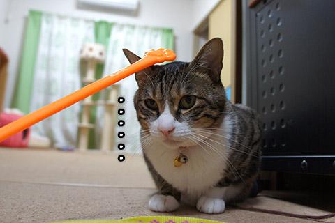 イマイチのってこないネコ