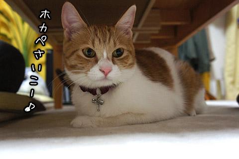 ホットカーペット大好きネコ1