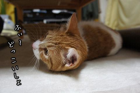 ホットカーペット大好きネコ2