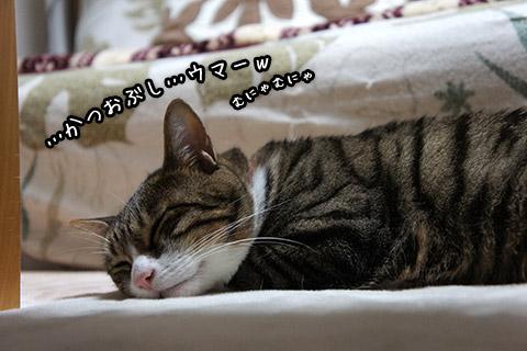 夢見るネコ