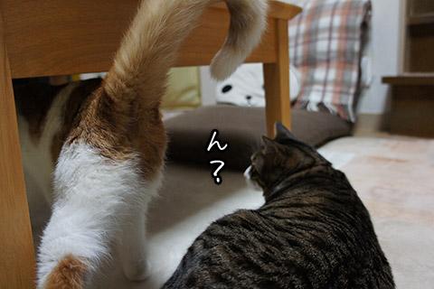 邪魔するネコ
