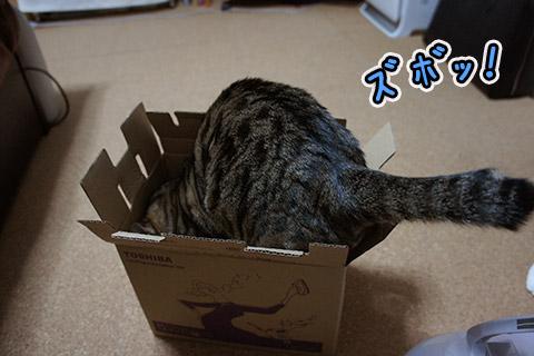 アイロンの箱に興味津々なネコ