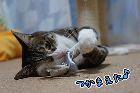 夢中なネコ