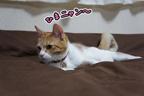 お遊びネコ1