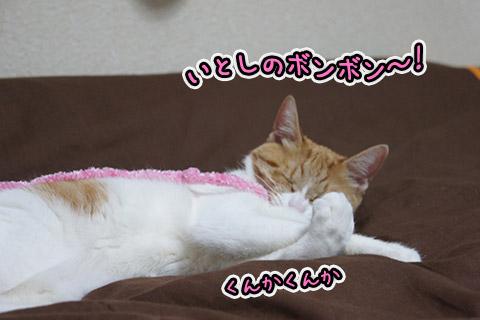 お遊びネコ4