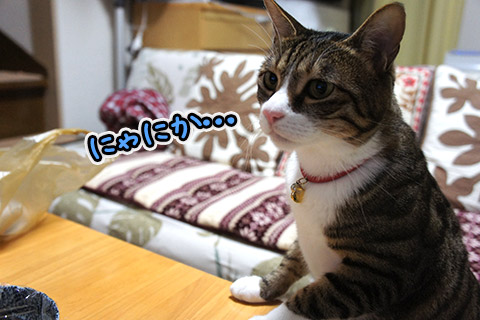 美味しい匂いに目がない猫1