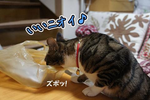 美味しい匂いに目がない猫2