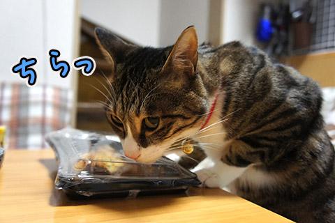 美味しい匂いに目がない猫5