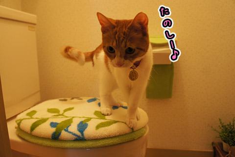 トイレ探索堪能