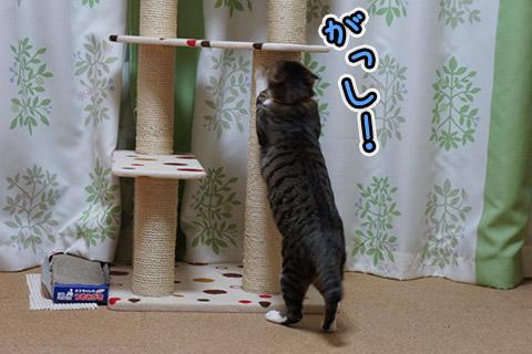 爪とぎするネコ1
